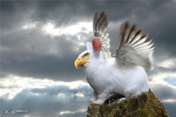 An Eagle, or a rabbit?
